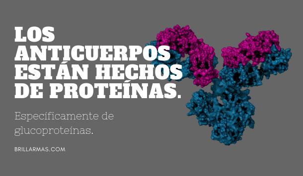 Los anticuerpos están hechos de proteínas.