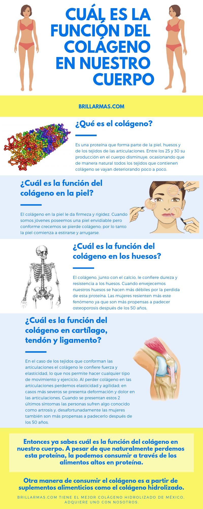 Cuál es la función del colágeno en nuestro cuerpo